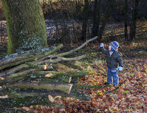 Little boy inspects hewn tree branches with a twig in a park Royalty Free Stock Photos