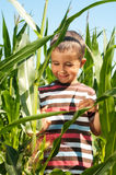 Little boy investigate yong corn Stock Photo