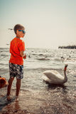 Little boy kid on beach have fun feeding swan. Stock Image