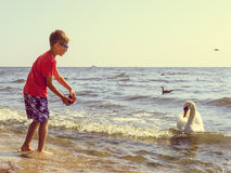Little boy kid on beach have fun feeding swan. Stock Image