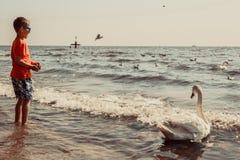 Little boy kid on beach have fun feeding swan. Royalty Free Stock Images