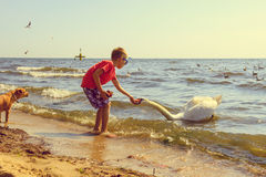 Little boy kid on beach have fun feeding swan. Stock Images