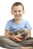 Little boy with kittens Stock Photos