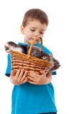 Little boy with kittens in wicker Stock Image