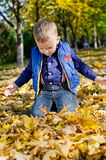 Little boy kneeling in autumn leaves Royalty Free Stock Photos