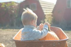 Little boy sitting inside wheelbarrow at field pumpkin patch Stock Photos