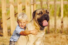 Little boy with large dog Royalty Free Stock Image