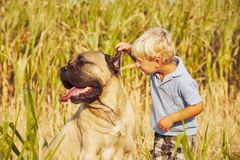 Little boy with large dog Stock Photography