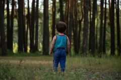Little boy on a lawn in front of a large pine forest stock image
