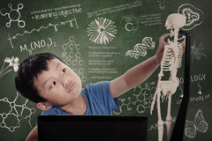 Little boy learns human anatomy Stock Image