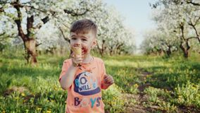 Little boy licking ice cream in a cone during springtime. The boy`s face is soiled with ice cream stock video