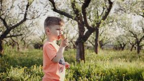 Little boy licking ice cream in a cone. During springtime. The boy`s face is soiled with ice cream. Slow motion steadicam shot stock video footage