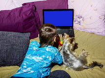 A little boy with a little dog looking at a laptop. A little boy with a Terrier Yorkshire look at laptop lying in bed Royalty Free Stock Images