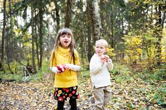 Little boy and little girl eating apples in forest Stock Image