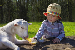 Little boy and little goat. Cute toddler feeding a goat Stock Images