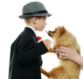 Little boy with little spitz stock photos