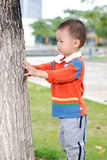 Little boy lookat the tree Stock Image