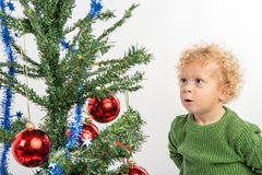 Little boy looking at the Christmas tree Stock Image
