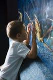 Little boy looking at fish tank Royalty Free Stock Photos