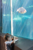 Little boy looking at fish tank Stock Images