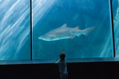 Little boy looking at fish tank Royalty Free Stock Photo
