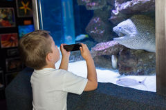 Little boy looking at fish tank Royalty Free Stock Images