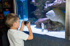Little boy looking at fish tank Stock Image