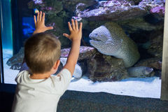 Little boy looking at fish tank Royalty Free Stock Image