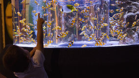 Little boy looking at fish tank Stock Photography
