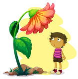 A little boy looking at the giant flower Royalty Free Stock Image