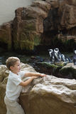Little boy looking at penguins Stock Images