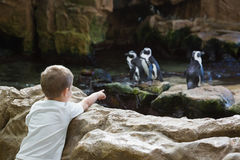 Little boy looking at penguins Royalty Free Stock Photos