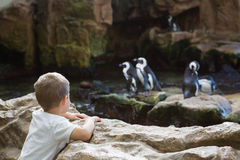 Little boy looking at penguins Stock Photo