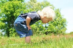 Little Boy looking at Something in the Grass. A young child is exploring nature outside on a sunny summer day, and finds something in the long grass stock photos