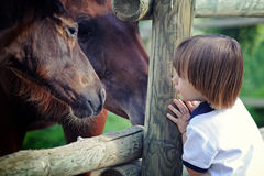Little boy looks at horse Royalty Free Stock Photography