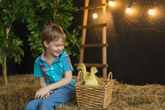 A little boy looks at little goslings and smiles in a farm Royalty Free Stock Photos