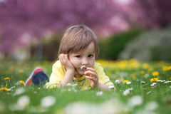 Little boy, lying in the park, playing with daisy on the grass Royalty Free Stock Photography