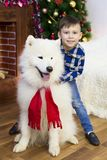 A boy with a big dog at Christmas. Little boy meets a holiday with a big white dog near a Christmas tree Stock Images