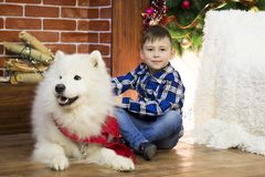 A boy with a big dog at Christmas. Little boy meets a holiday with a big white dog near a Christmas tree Stock Photos