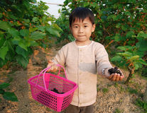 Little boy and mulberry. Little boy carrying a basket with mulberry in his hand on the farm royalty free stock photo