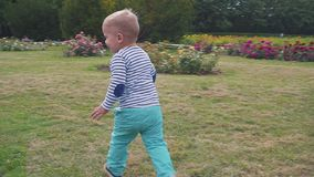 Little boyis playes with roses near the rose bush. Little boy near the rose bush stock video