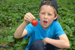 Little boy with open mouth looks at strawberry. Countryside strawberry plantation: a cute young boy looking at the strawberry he picked up on garden-bed Stock Photo