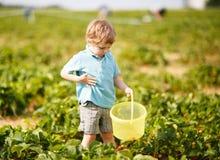Little boy  on organic strawberry farm Stock Photos