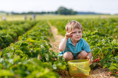 Little boy  on organic strawberry farm Stock Photo