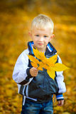 Little boy outdoors autumn. With yellow leaves Stock Image