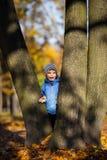 Little Boy på en trädfilial behandla som ett barn klättringar ett träd arkivbild