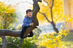 Little Boy på en trädfilial behandla som ett barn klättringar ett träd arkivbilder