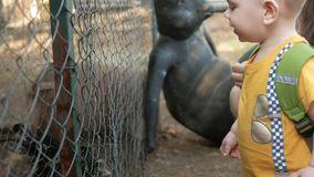 A little boy with parents feeding a rabbit with green grass in a zoo. Several beasts eat.