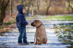 Little boy in the park with his dog friend Stock Image