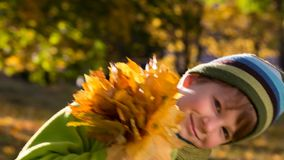 Little boy on park with yellow leaves stock footage
